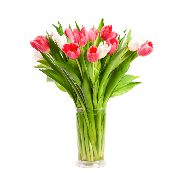 Red and white tulips in a vase